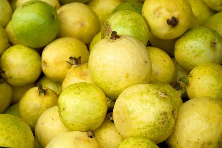 guavas in Grenada