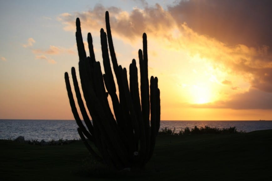 cactus in curaçao