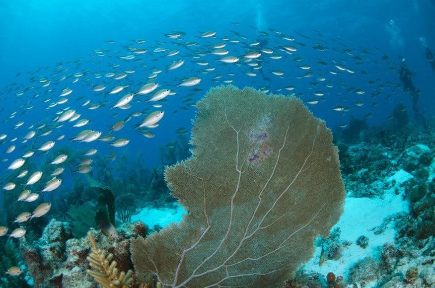 St. Vincent underwater