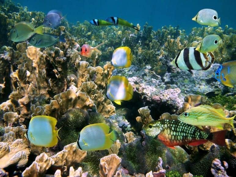 barbados underwater