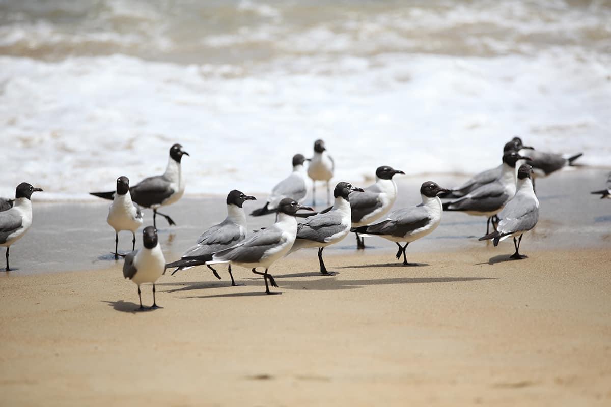 seabirds in tobago